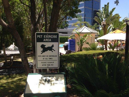 Hyatt Regency Century Plaza: Pet friendly area by the pool