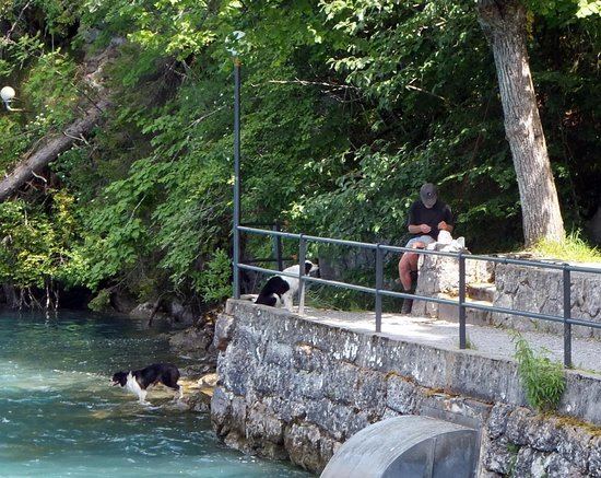 Brienzersee: Looking for fish and Masters food