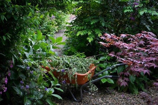 Whitepark House: Back garden