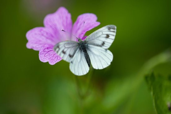Whitepark House: The butterfly in the back garden