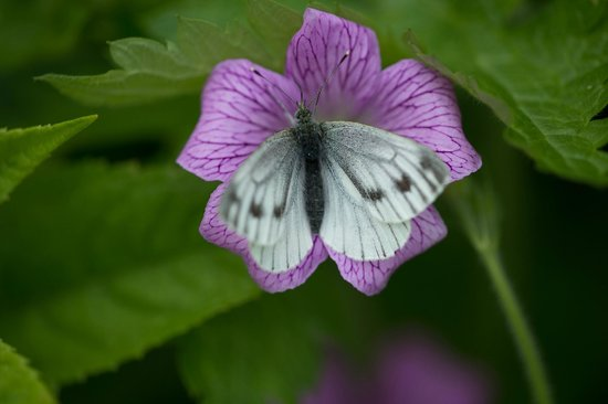 Whitepark House: The butterfly