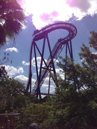 Busch Gardens : Sheikra!