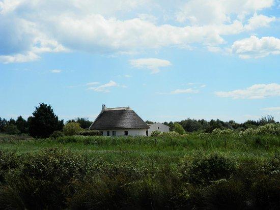 Maison typique de la camargue avec toit en sagne picture for Maison de la camargue