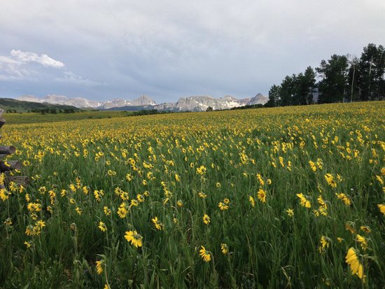Last Dollar Road : Daisy Field