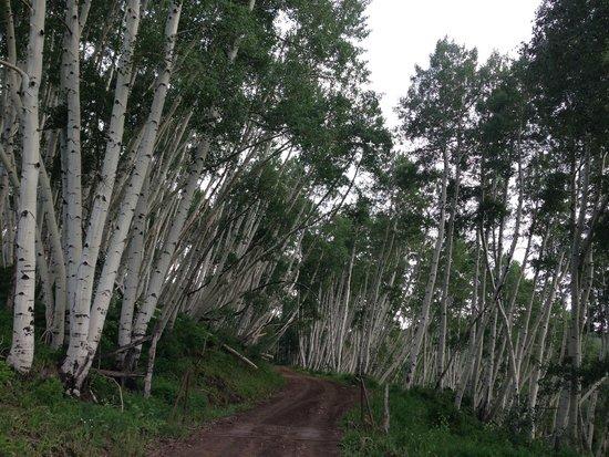 Last Dollar Road : Aspen Grove