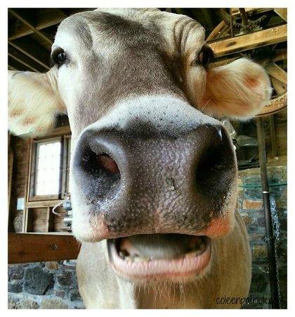 Shelburne Farms: Ariella