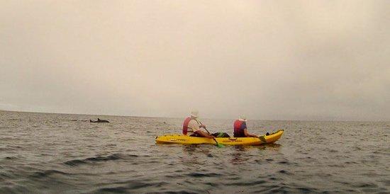 Hawaiian Paddle Sports: spinner dolpins