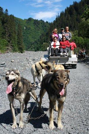 Seavey's IdidaRide Sled Dog Tours : On a break from sledding practice
