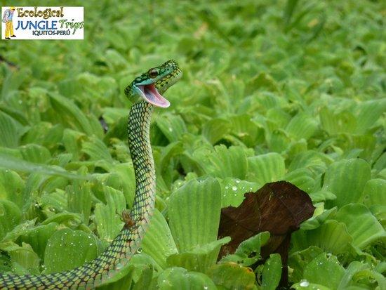 Ecological Jungle Trips : Snake