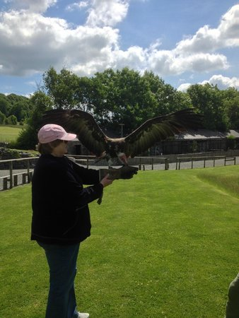 Yorkshire Dales Falconry and Conservation Centre: Gonzo gets a deserved treat !