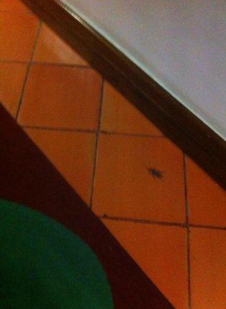 Hotel do Mar : cockroaches/baratas