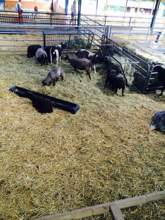 Godstone Farm & Playbarn : Animals
