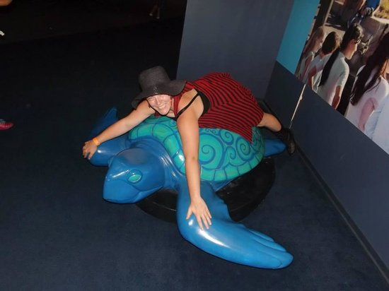 Clearwater Marine Aquarium: Riding a turtle lol!