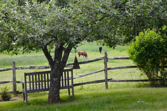 Meadow Farm Bed and Breakfast: Onwer's horses on the B&B's meadow