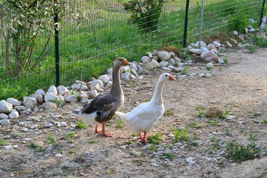 Domus Petrae Bed & Breakfast: Quack
