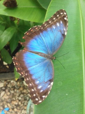 The Lodge at Chaa Creek: Butterfly