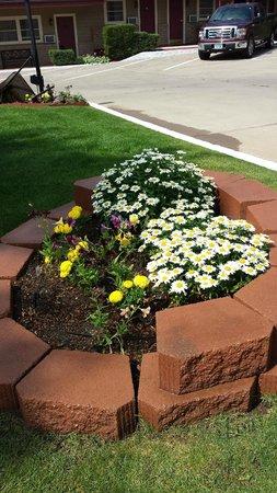 Siesta Motel : Flowers in our courtyard