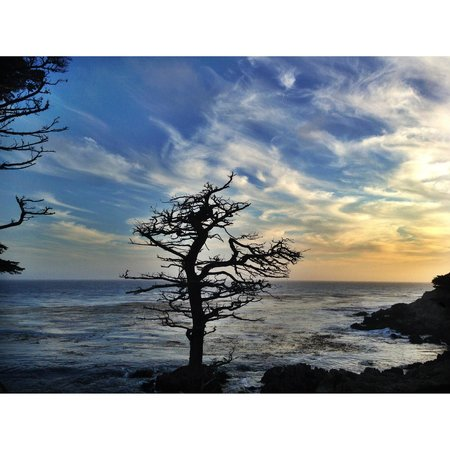 17-Mile Drive : lonely tree