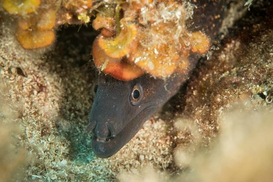 Nautilus Diving Center: Moray eel