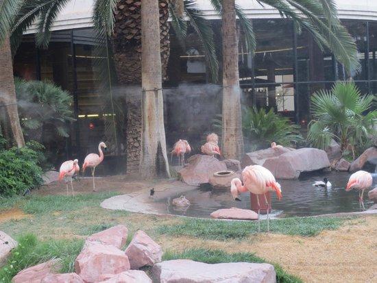 Flamingo Las Vegas Hotel & Casino: Flamingoer i haven