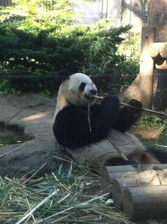 Ueno Park : Panda