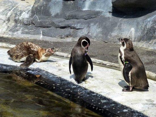 Parc Zoologique de Paris: manchot