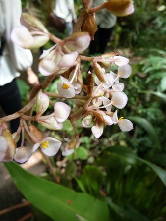 Orquideas Moxviquil: OR11