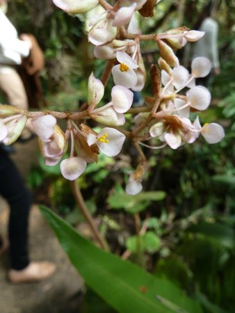 Orquideas Moxviquil: OR4