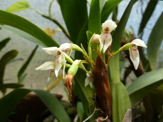 Orquideas Moxviquil: OR10