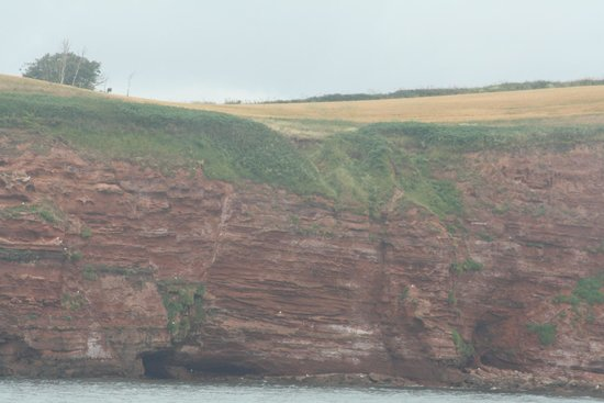 Stuart Line Cruises: Some Green on Cliffs