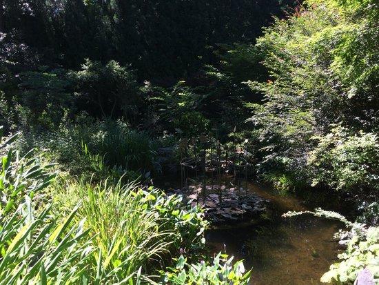 Smith Gilbert Gardens: Coy pond