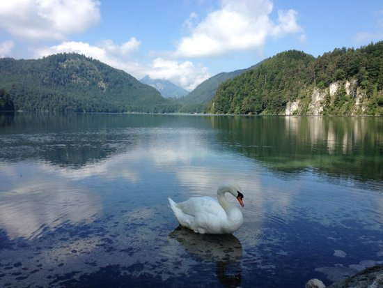 Alpsee: Swan Lake