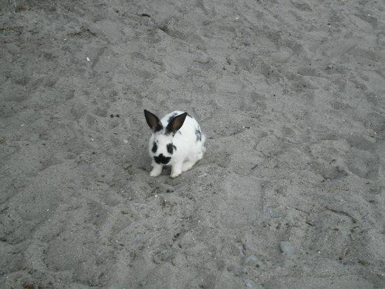 White Point Beach Resort: Bunnies