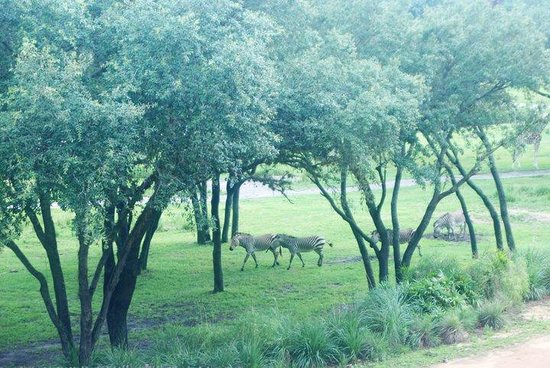 Disney's Animal Kingdom Lodge : The view from our balcony.