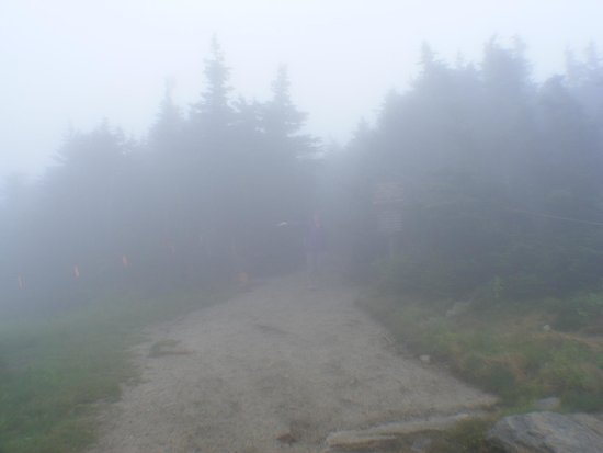 Cannon Mountain: Could this be the Trail?