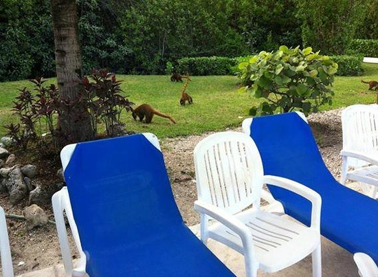 BlueBay Grand Esmeralda : coatis on the property