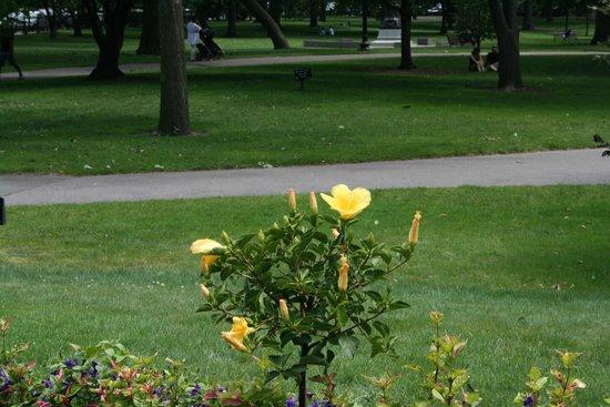 Boston Public Garden: One of the many flowers in Garden