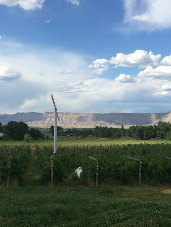 Whitewater Hill Vineyards: View out front door