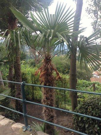 Tappeinerweg: Palm trees in Tyrol!