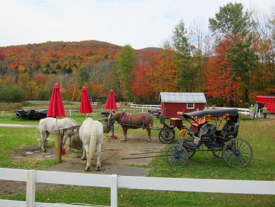 Gentle Giants Sleigh and Carriage Rides: What a beautiful place for a carriage ride!