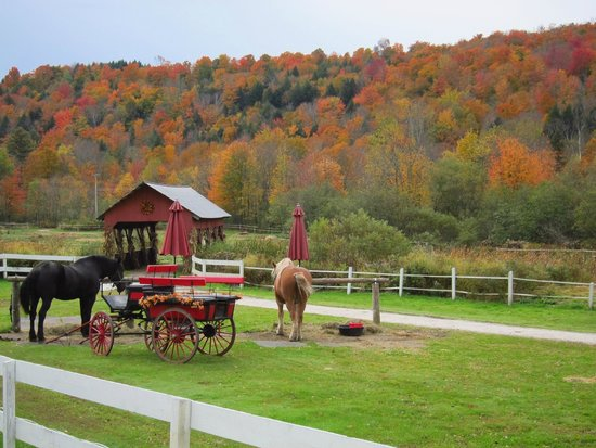 Gentle Giants Sleigh and Carriage Rides: For what more could you ask?