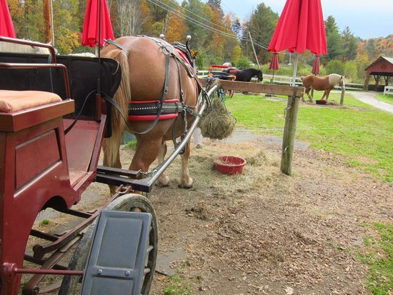 Gentle Giants Sleigh and Carriage Rides: Our horse snacking between rides