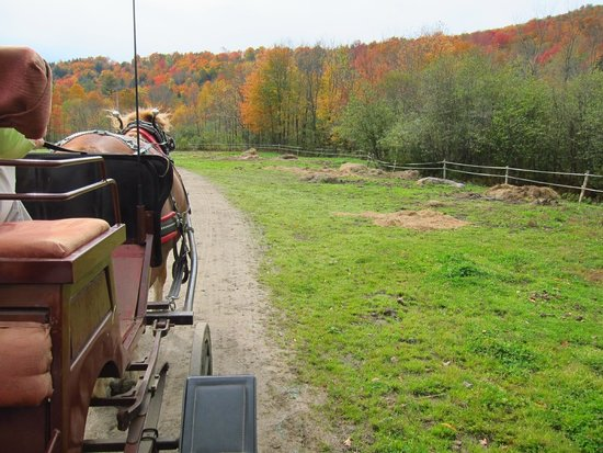 Gentle Giants Sleigh and Carriage Rides: A perfect day