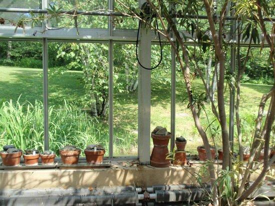 Stonecrop Gardens : Stone crop