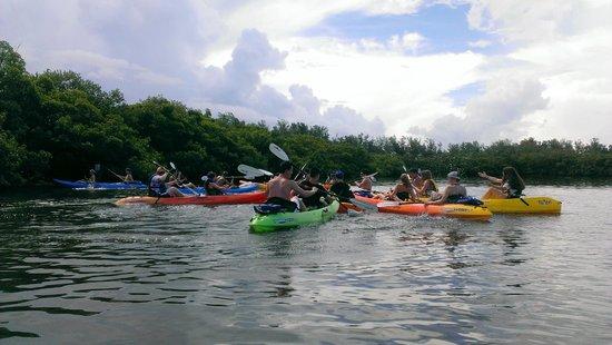 Sea Life Kayak Adventures: S. Lido