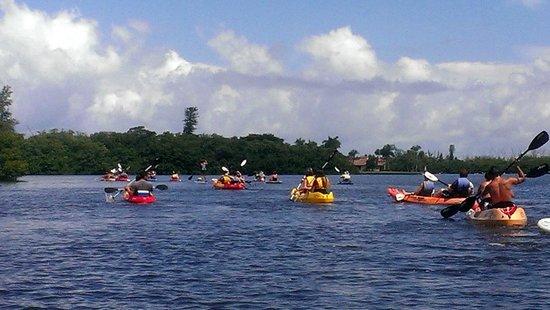 Sea Life Kayak Adventures: Cruisin!