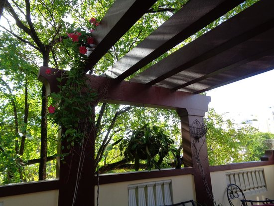 Casa Castellana Bed & Breakfast Inn: Looking out into the trees from the third floor