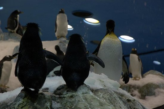 Amazing Penguin Island at Loro Parque