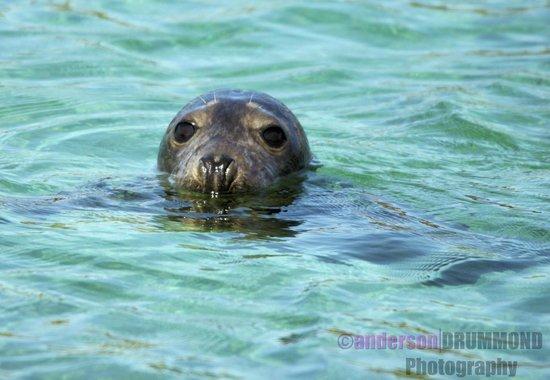 Ardnamurchan Charters: Seal