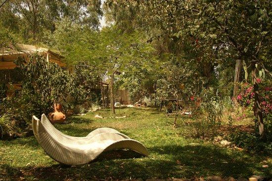 Pina Balev: Garden
